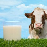 Sữa tươi nguyên kem là gì? phân biệt giữa sữa và bột nguyên kem