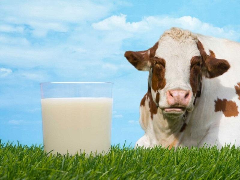 Sữa Australia Own Low Fat ít béo