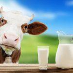 Sữa tươi không đường là gì? tác dụng cũa sữa không đường tốt hay xấu?