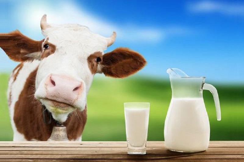 sữa tăng chiều cao