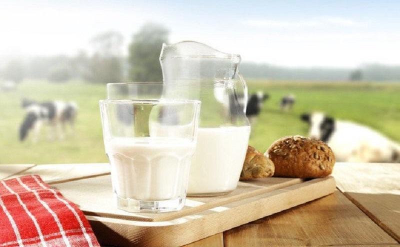 Sữa tươi Organic 100%