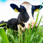 Sữa tươi organic, xu thế chọn lựa thông minh của người tiêu dùng Việt Nam